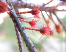 Fiore cicogna, voglia di maternità