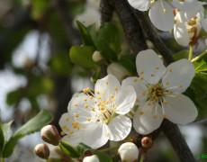 Rimedi floreali per l'intestino