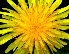 I fiori australiani e californiani ci vengono in soccorso per alleviare lo stress